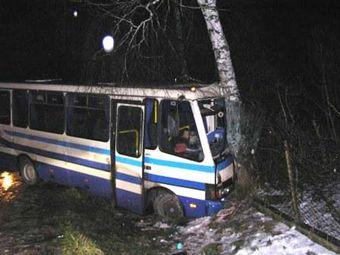 Автобус врізався в дерево