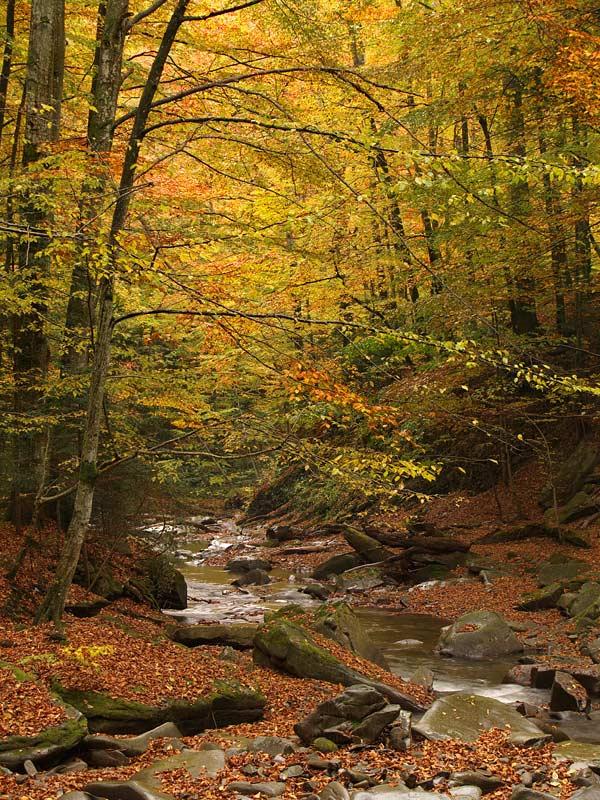 У природі вже правує золота осінь