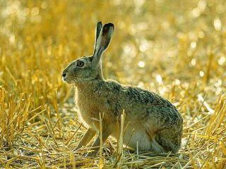 Электроманок и другие меры защиты от зайца