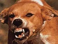 На Рівненщині жертвами скаженого пса стали четверо дітей
