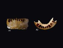 Вчені виявили залишки людини, про існування котрої ніхто не знав