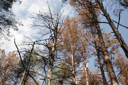 В Україні масово загинули дерева на площі майже 400 тисяч гектарів