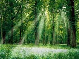 Рівненські ліси збагатили бюджети на 61 мільйон гривень