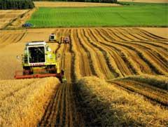 Майже 22 мільйони гривень  держпідтримки отримали торік аграрії області