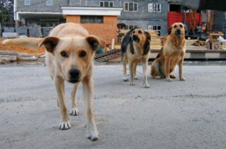 Рівняни захищали бездомних тварин