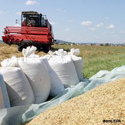 В Україні зібрано майже 46 млн. тонн зернових