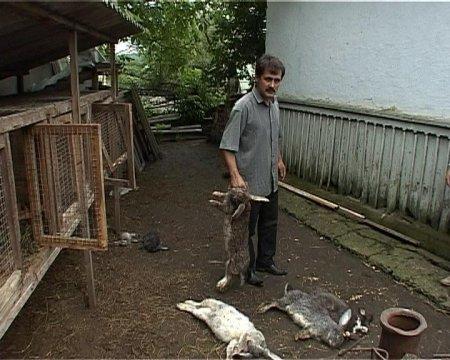 Чупакабра висмоктала кров у 22 кролів на Буковині (ФОТО)
