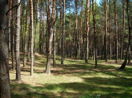 Якби я керував лісом