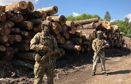 На Закарпатті СБУ блокувала масштабне розкрадання деревини з Лазещинського лісництва